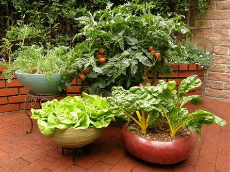 container gardening complete creative projects for growing vegetables and flowers in small spaces books 15 stunning container vegetable garden design ideas tips
