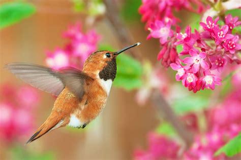 hummingbirds bird house habitat boise idaho 208 375 8051