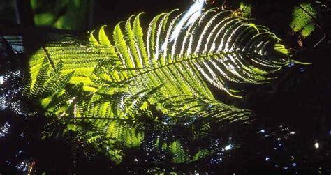 illuminazione per piante illuminazione piante