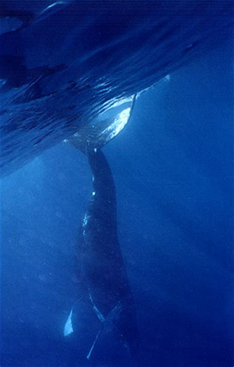 the whale a tale of galactic travel and books whales of caribbean 2002