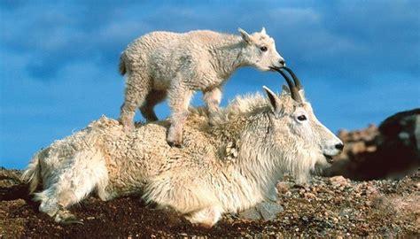 imagenes de paisajes salvajes escoge los paisajes con animales salvajes que mas te