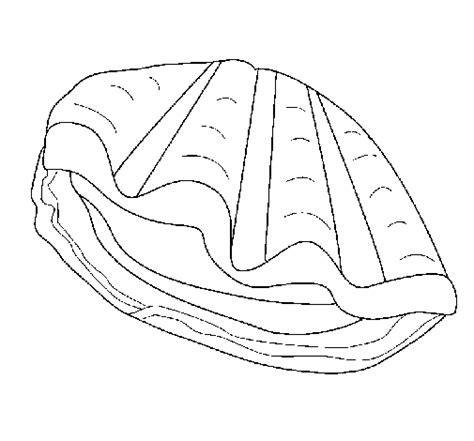 clam coloring page