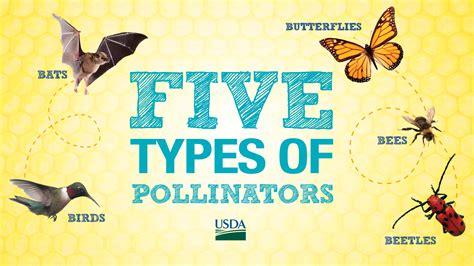 protecting pollinators nrcs caribbean area