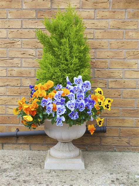 Winter Container Garden by Winter Container Garden Ideas Tips For Container