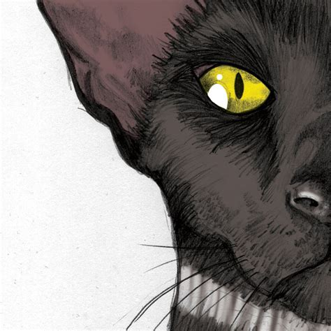 the black cat by edgar allan poe adapted text first the black cat ink manners