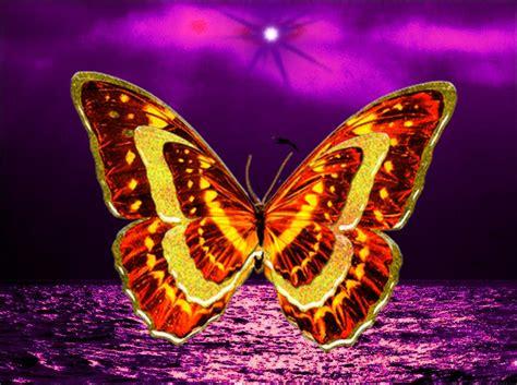 imagenes de mariposas hermosas animadas fondos pantalla mariposas hermosas imagui