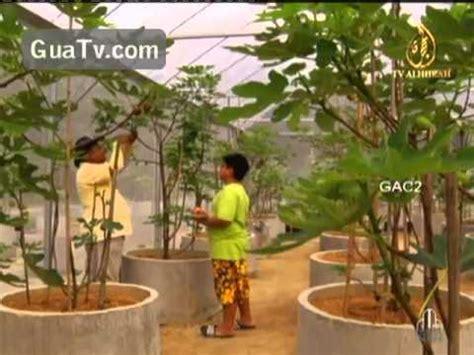Sekam Padi Bakar Untuk Dijual amanda putri s garden pokok tin di malaysia