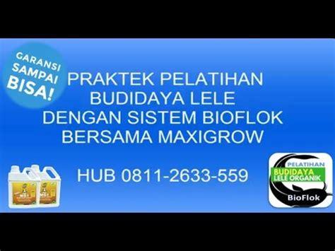 Bibit Lele Klaten pelatihan budidaya lele bioflok di klaten hubungi 0811
