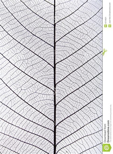 pattern leaf veins black leaf vein pattern stock image image 4714521