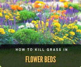 weed killer for flower beds how to kill grass in flower beds what you need to know
