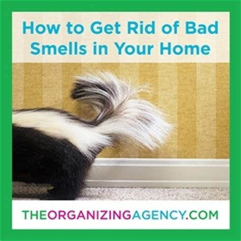 how to get rid of bad odor in house how to get rid of bad smells at home a guide to banish bad smells for good the organizing agency