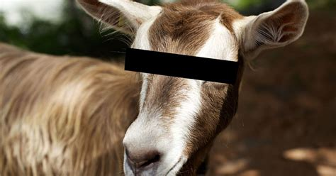Romps In The Bushes by Arrested For With Goat Admits Romps With