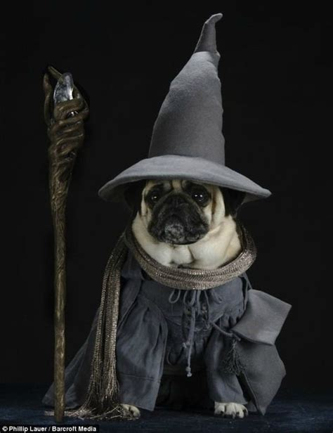 pug of the rings 27 best pug costumes for chewy images on