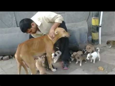 street dog birthed  puppies youtube