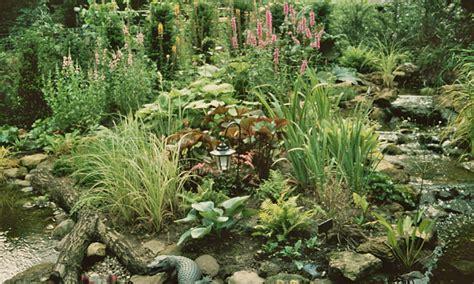 Bog Garden by How To Build A Bog Garden Around Your Pond Waterside