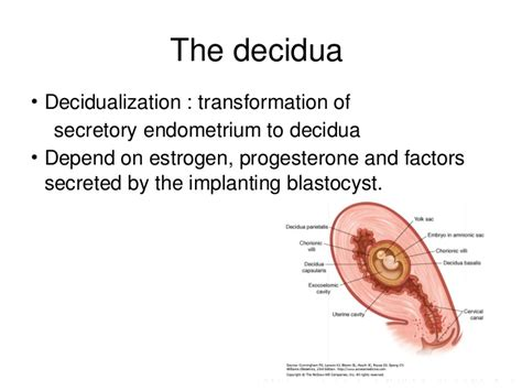 decidua basalis implantation embryology and placental development