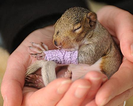 this is nuts: baby squirrel in a cute baby size cast