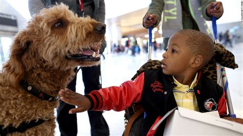 certified comfort dog furry counselors give comfort in orlando cnn com