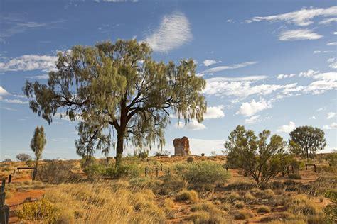 the oak of the desert on the road
