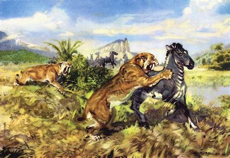libro cats prey 17 best images about sabertooth cats on serum ice age and cats