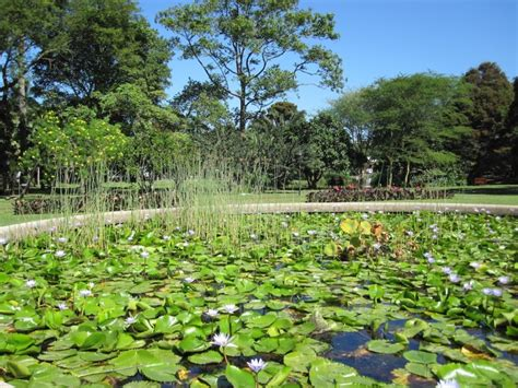 Durban Botanic Gardens Durban Botanic Gardens Durban South Africa Modern Overland