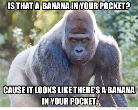 Gorilla Meme - seductive gorilla weknowmemes