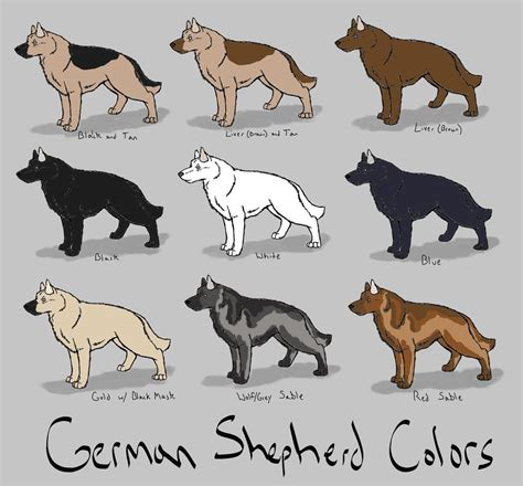 german shepherd colors poster glog by gaelvazquez7 publish with glogster
