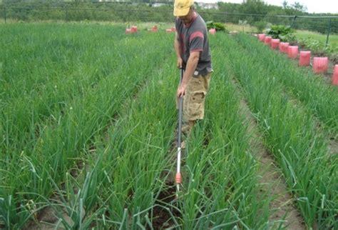 backyard farming blog losing land is no tragedy for a backyard farmer backyard