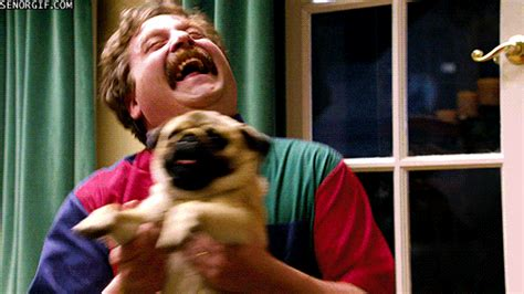 zach galifianakis pug happy gif find on giphy