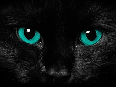 Wallpaper Cat Green | animals zoo park black cat eyes wallpapers blue cat eyes