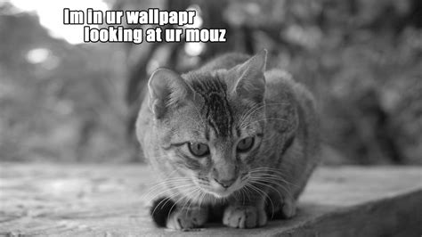 cat jokes wallpaper download cats humor wallpaper 1920x1080 wallpoper 247297