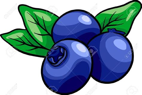blueberry clipart blueberry clipart pencil and in color blueberry