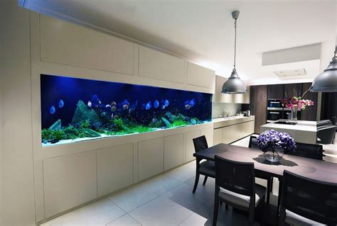 aquarium design sydney transform the way your home looks using a fish tank