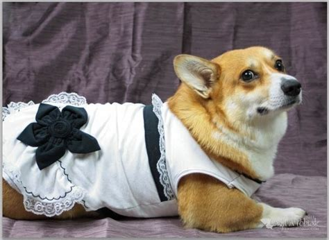 party dress   corgi     dog outfit