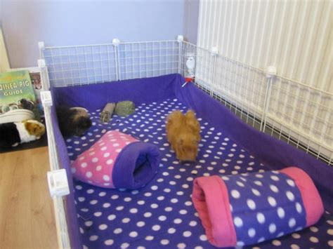 fleece bedding and matching tubes guinea pigs pinterest