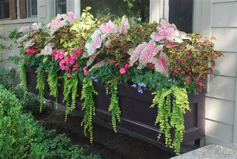 window box ideas for shade shade annuals for michigan dirt simple