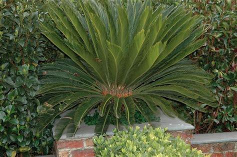 piante esotiche da giardino piante esotiche da giardino vivaio la coccinella