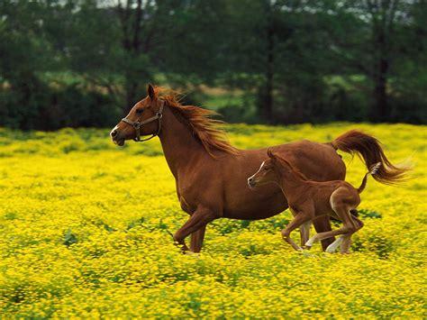 wallpaper horse free download running horse wallpaper high resolution