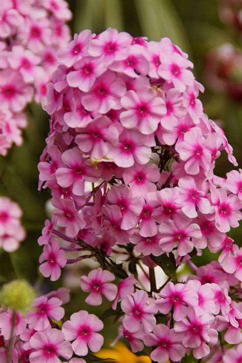 best fragrant plants top 10 scented plants that will make your garden a