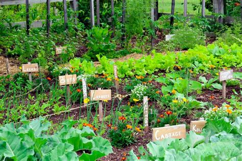 garden tips 5 secrets of a high yield gardening vegetable gardening
