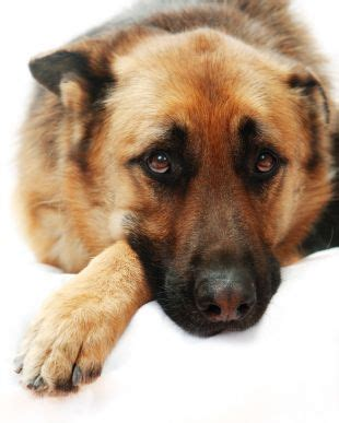 when do dogs start their period swindon needy dogs need heroes