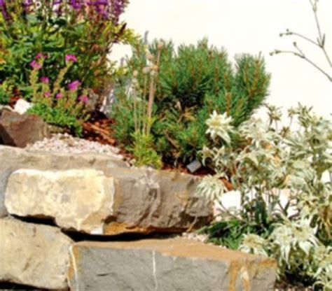 giardini rocciosi fotografie costruire un giardino roccioso come e dove realizzarlo