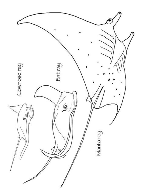 coloring pages sharks and rays cownose rays coloring pages clipart library
