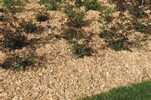 le paillage tout pour pailler votre jardin