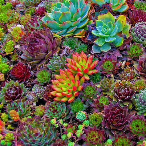 care  succulents essential home  garden