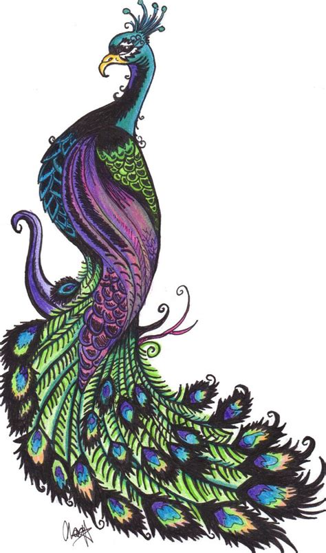 pretty peacock feather drawing creativefan peacock clipart best peacocks