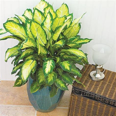 easy houseplants poisonous plants in the home the plant pets and house
