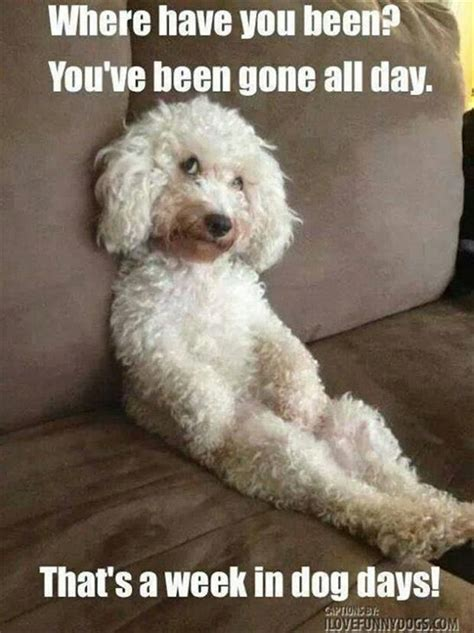 Frowning Dog Meme - 16 best images about funny on pinterest cocker spaniel