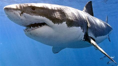 Im Wasser by Tiere Im Wasser Natur Planet Wissen