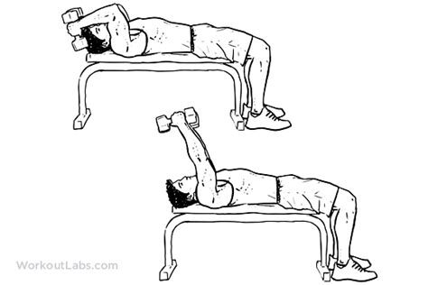 flat bench tricep extension lying dumbbell tricep extension illustrated exercise